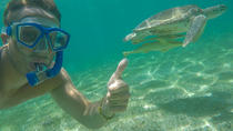 Turtle Beach North Shore Snorkeling Tour, Oahu, Photography Tours