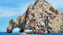 Whale Watching Cruise on the Sea of Cortez, Los Cabos, Dolphin & Whale Watching