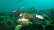 St Lucia Beginner Scuba Diving Tour, St Lucia, Scuba Diving