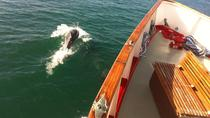 Return Jurassic Coast Cruise to Swanage from Poole, Poole, Day Cruises