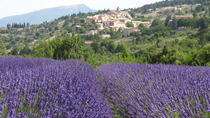 Lavender Tour Sault from Marseille, Marsella