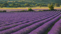 Private Tour: Provence Lavender Fields and Aix-en-Provence Day Trip from Marseille, Marseille, ...