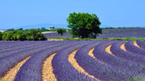 Provence Lavender Fields and Aix-en-Provence Tour from Marseille, Marseille, Day Trips
