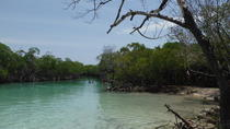 Mangrove Swim, Snorkel and Exploration Tour, San Juan, Day Trips
