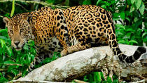 7-Day Manu National Reserve from Cusco, Cusco, Multi-day Tours