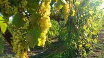 Bratislava 3 Hour Wine Tasting, Bratislava, Wine Tasting & Winery Tours