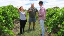Private & Premium McLaren Vale Wine Journey, Adelaide, Private Sightseeing Tours