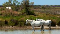 Excursion privée en Provence : la Camargue, Les-Saintes-Maries-de-la-Mer et Aigues-Mortes, ...