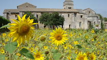 Private Provence-Tour: Auf den Spuren von Van Gogh, Avignon, Private Touren