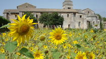 Private Provence Tour: In the Footsteps of Van Gogh, Avignon, Day Trips
