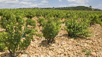 Private Rhone Valley Wine Tour from Avignon: Chateauneuf-du-Pape and Tavel, Avignon, Day Trips