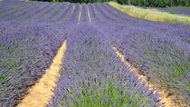Small-Group Day Trip to Lavender Fields and Provencal Villages including Lavender Museum Visit from ...