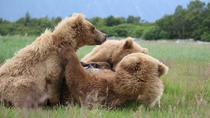 Full-Day Sightseeing and Bear Watching Trip, Anchorage, Air Tours