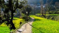 Day hike around Dharamkot and Bahl Village, Dharmasala, Hiking & Camping