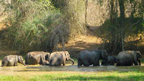 Private Wildlife Safari in Wayanad, Kerala, Safaris