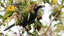 Bird Watching Tour in Monteverde, Monteverde, Nature & Wildlife