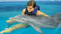 Dolphin Cove Adventures from Montego Bay, Montego Bay, Swim with Dolphins
