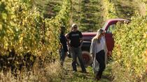 Winery Tour and Tasting of Covert Farms Family Estate, Kelowna & Okanagan Valley, Wine Tasting ...