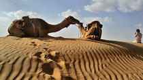 Private Camel Safari Tour to Oman Wahiba Sands, Oman, Day Trips