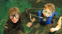 Swim with the Fishes at The Florida Aquarium in Tampa Bay, Tampa, Ports of Call Tours