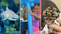 Three great attractions, one great price with The Tampa TRIO, Tampa, Museum Tickets & Passes