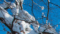 4-Night Christmas Package in Salzburg Including Mozarteum Concert and Horse-Drawn Sleigh Ride,...