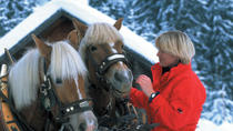 Private Horse Drawn Sleigh Ride from Salzburg