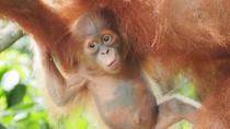 6 Day North Sumatra Jungles Orangutans Overnight trek and Hot Springs, Medan