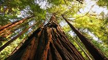 Small Group Muir Woods and Sausalito Tour, San Francisco, Half-day Tours
