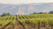 Small Group Muir Woods and Wine Country Tour, San Francisco, Wine Tasting & Winery Tours