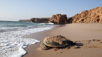 Turtles By Night, Muscat, Night Tours