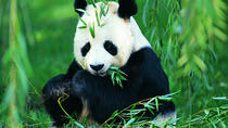 Chengdu Private Day Tour of Panda Breeding Center, Wide-and-Narrow Alley, and Jinli Food Street, ...