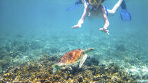 Turtle Reef Kayak Tour, Maui, Snorkeling