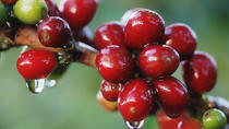 Coffee and Chocolate Walking and Sightseeing Tour at Monteverde Santa Elena, Monteverde, Chocolate ...