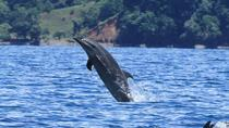 Dolphin watching mangrove snorkeling tour at Golfo Dulce in the Pacific side, Puerto Jiménez, ...