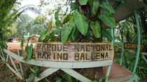 Marino Ballena National Park Hike and Wildlife Watching Tour at Puntarenas, Puntarenas, Hiking & ...