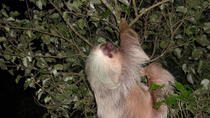 Night hike wildlife observation in Santa Elena Monteverde, Monteverde, Hiking & Camping