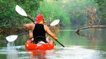 Nosara river guided kayak mangrove and environment watching tour in Guanacaste, Liberia, Kayaking &...