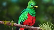 Quetzales scarlet macaws and birds watching tour in San Gerardo de dota San Jose, San Jose, ...