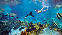 San Juanillo beach snorkel marine wildlife tour at Nosara in Guanacaste, Sámara, Snorkeling
