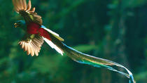 Savegre guided quetzal and wildlife observation tour at Talamanca, Quepos