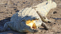 Tarcoles River Crocodile and Wildlife River Cruise from San Jose, San Jose, Day Cruises