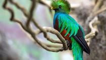 Tour to the Curricancha Reserve in Monteverde a paradise for birdwatchers, Monteverde, Cultural ...