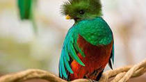 Tour to the Curricancha Reserve in Monteverde, a paradise for birdwatchers from San José, San Jose,...