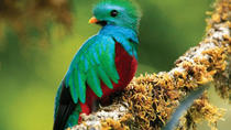 Tour to the Monteverde Reserve rainforest wildlife observation from San Jose, San Jose, Cultural...