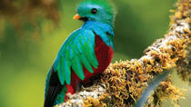 Tour to the Monteverde Reserve rainforest wildlife observation, Monteverde, Cultural Tours