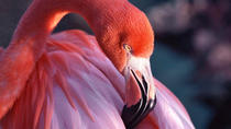 Celestun National Park and Flamingos Tour from Merida, Merida, Eco Tours