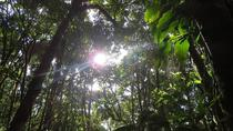 Monteverde Cloud Forest Hike plus Coffee Tour 3 in 1(Coffee Chocolate and sugar cane), Monteverde, ...