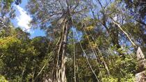 TREE TOP CLIMBING MONTEVERDE, Monteverde, Climbing