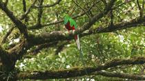 Walking Reserve Curi-Cancha, Monteverde, Cultural Tours